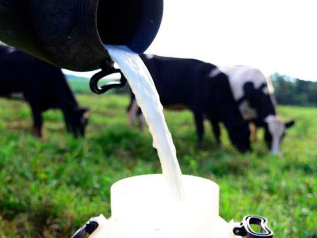 MAPA abre consulta pública para aperfeiçoar as normas de qualidade do leite